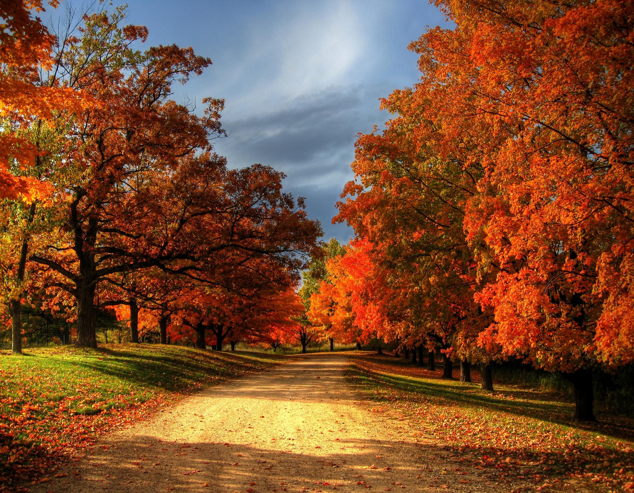 Quotes About Fall Colors Quotesgram